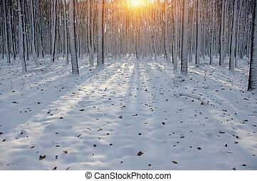 tramonto, in, inverno, foresta