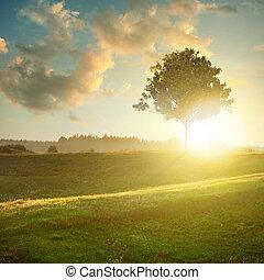 tramonto, paesaggio albero