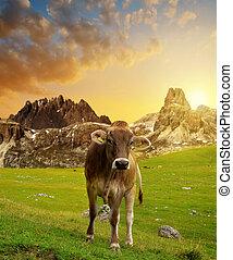 tramonto, prato, mucca