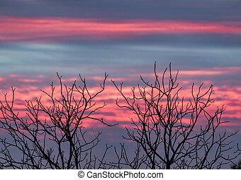 tramonto, proiettato, rami albero