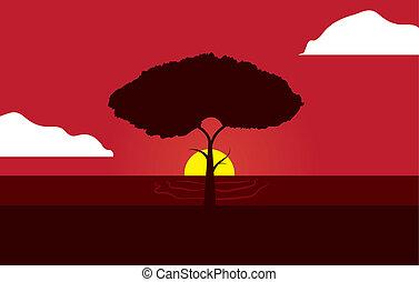 tramonto rosso, albero