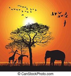 tramonto, safari, sopra