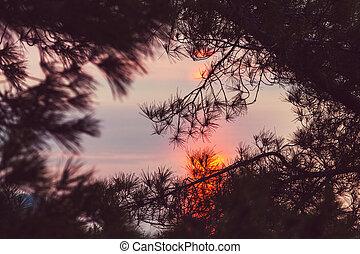 tramonto, scena
