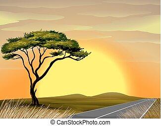 tramonto, scena, savana