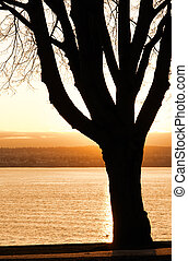 tramonto, silhouette