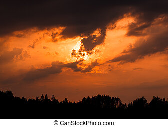 tramonto, silhouette, foresta, infocato