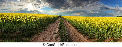 tramonto, sopra, canola, campo, con, percorso, in, slovacchia, -, panorama
