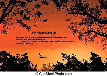 tramonto, sopra, volare, albero, uccelli