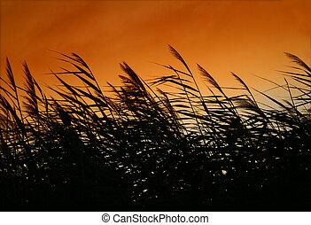 tramonto, sussurrio, pettini, vento