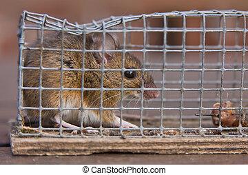 trampa del ratón