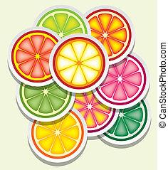 tranches, citrus, vecteur