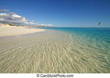 tranqüilo, cena praia, com, gaivota, f