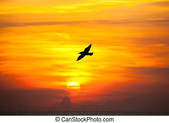 tranqüilo, voando, pôr do sol, cena, gaivota