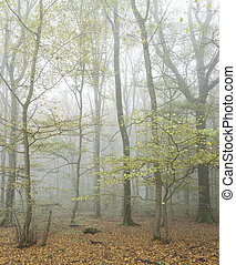 tranquil atmosphere in misty fall forest