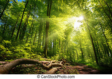 Tranquil bright sun rays in the forest
