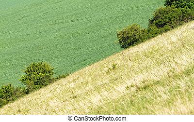 tranquil, græsjord, hos, solopgang
