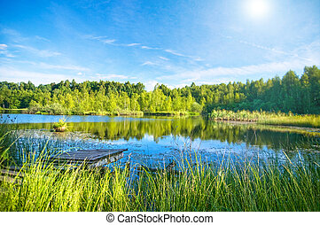 Tranquil lake in the forest
