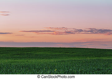 tranquil landscape of field in sunset