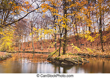 Tranquil pond in autumn