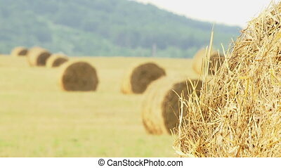 Tranquil Scene - Hay wrapped in a haystack of lies all over...