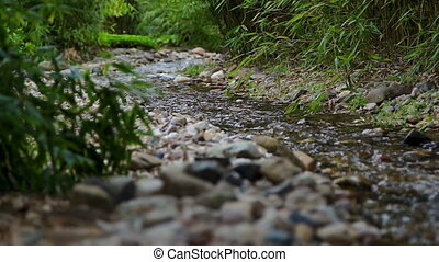 Tranquil scene with a creek stream in the woods - Beautiful...
