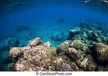 Tranquil underwater scene. Tropical blue ocean