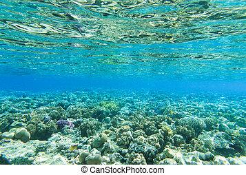 underwater - Tranquil underwater scene with copy space