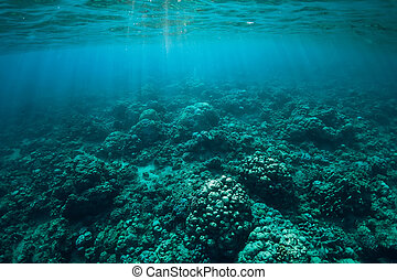 Tranquil underwater scene with corals and sun rays. Tropical sea
