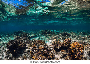 Tranquil underwater scene with corals in tropical ocean
