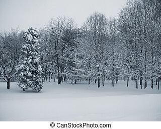 tranquilidad, bosque