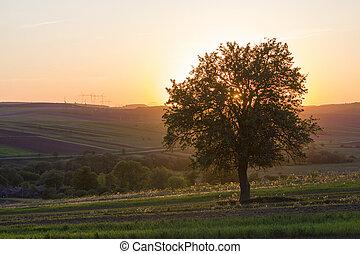 tranquilidad, y, pacífico, vista, de, hermoso, grande, árbol verde, en, ocaso, crecer, solamente, en, primavera, campo, en, distante, colinas, bañado, en, naranja, tarde, luz del sol, y, alto voltaje, líneas, extensión, a, horizonte, fondo.