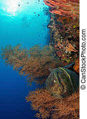 a sea turtle with two remoras on its back taking a rest at soft coral around the wall at Bunaken, Manado, Indonesia