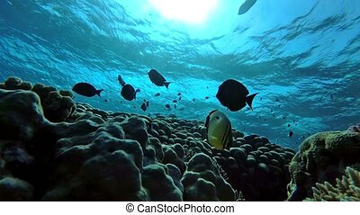 Tranquilizing backlit colorful coral reef teeming fish - ...