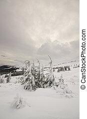 Tranquillity of winter. Carpathian, Ukraine.