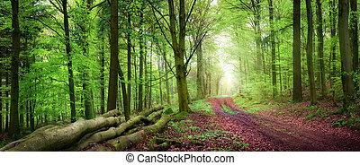 tranquillo, foresta, scenario