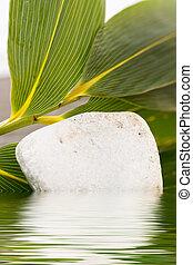 tranquillo, roccia, in, acqua, con, foglie, in, fondo