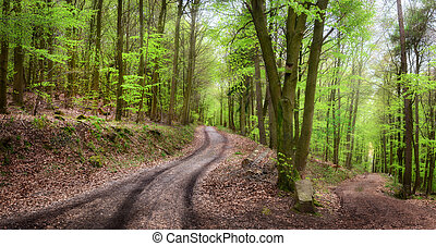tranquilo, bosque, paisaje