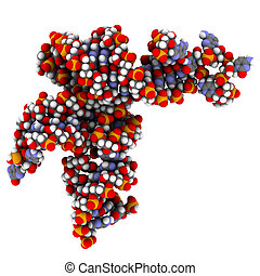 Transfer RNA (tRNA, Leucyl-tRNA) molecule from the bacterium E. coli, crystal structure. Atoms are represented as spheres with conventional color coding: hydrogen (white), carbon (grey), oxygen (red), nitrogen (blue), phosphorus (orange).