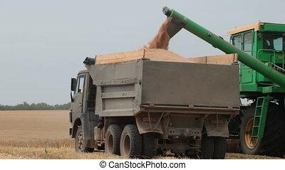 Transferring Wheat from Field