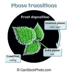 transição, gasoso, sólido, geada, -, leaves., state., rime, deposição, fase, framboesa, macio