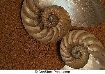 transition-nautilus, spirale