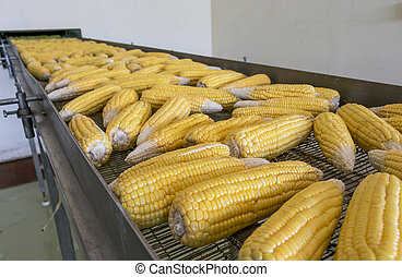 transmission, frais, maïs, usine, ceinture