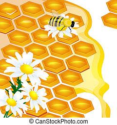 transpar, bevat, illustratie, ontwerp, bloemen, honingraat