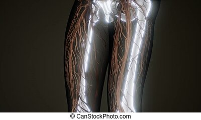 Transparent Human Body with Visible Bones - medical science...
