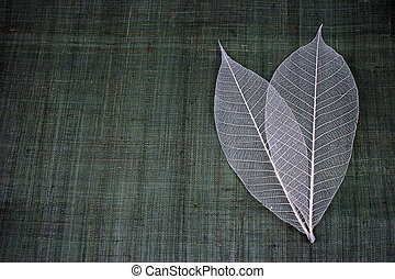 Transparent leaves on a natural green background - copy space.