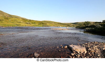 transparent salmon river in the tundra - river over polar...