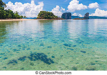 transparent sea water and a group of sea urchins in the tropical beautiful place of Thailand