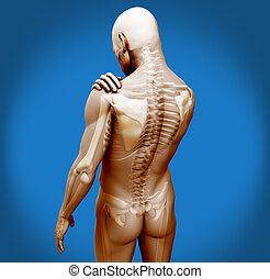 transparente, digital, cuerpo, con, hombro, dolor