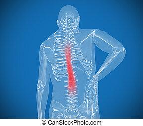 transparente, digital, esqueleto, teniendo, dolor, en, el suyo, espalda