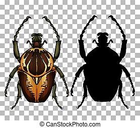 transparente, escarabajo, plano de fondo